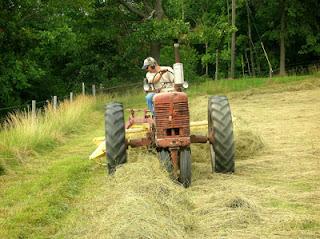 raking hayfield 2