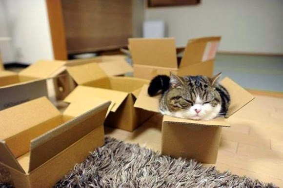"""Outrageous!"" Battle of puss! ! Small box is also my position!"