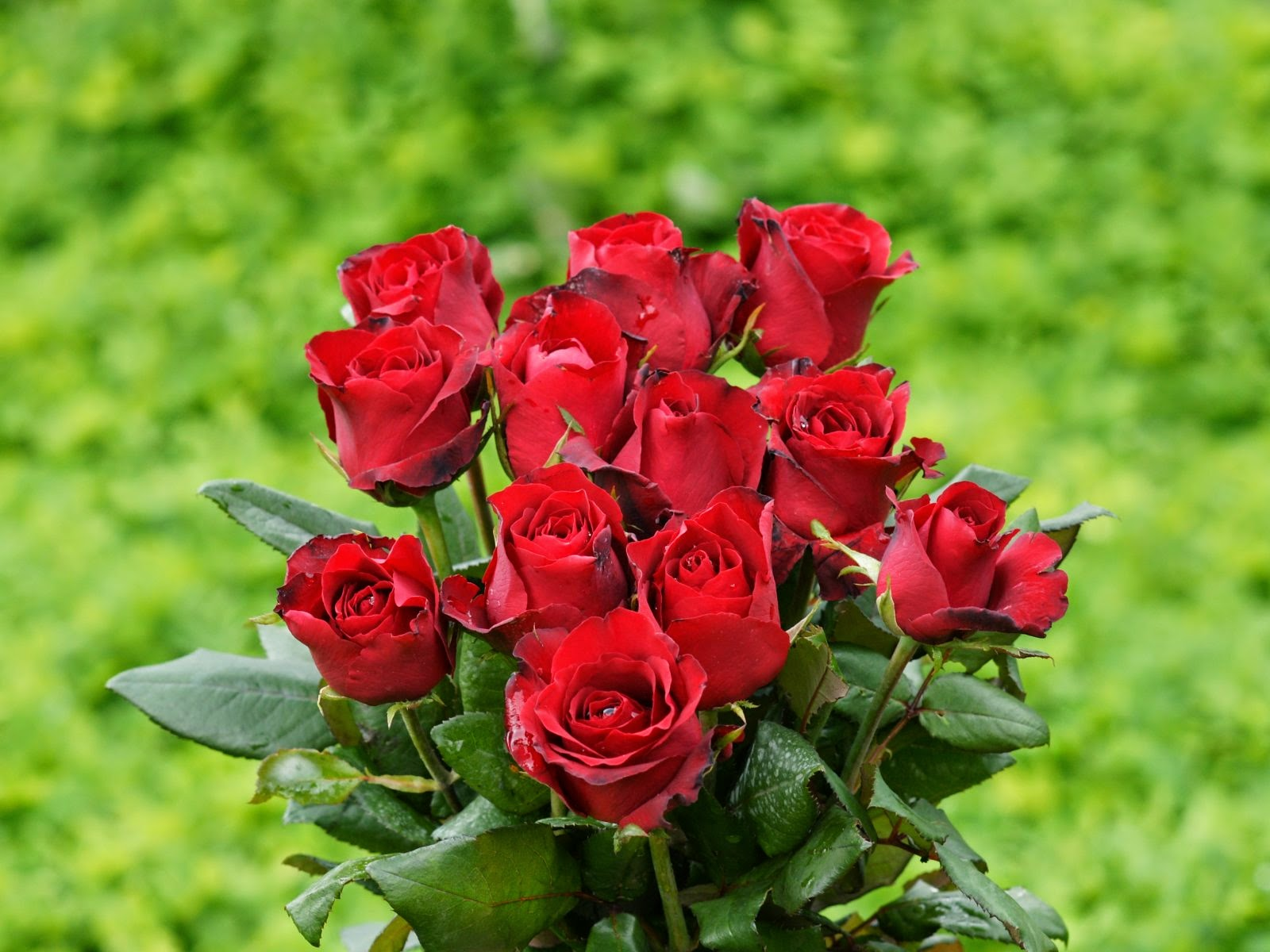 Top 10 most beautiful flowers in the world top 10 listverse car the rose flower is really the most beautiful flower in the world from its looks and the way it has been widely used for different occasion dhlflorist Choice Image