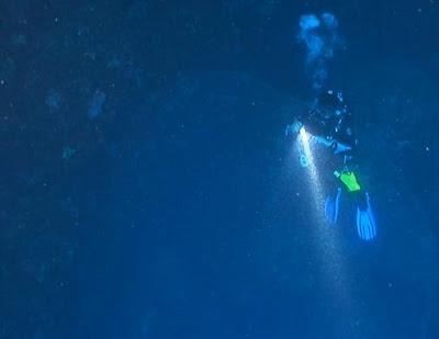 Telur Cumi Raksasa Ditemukan di Bawah Laut