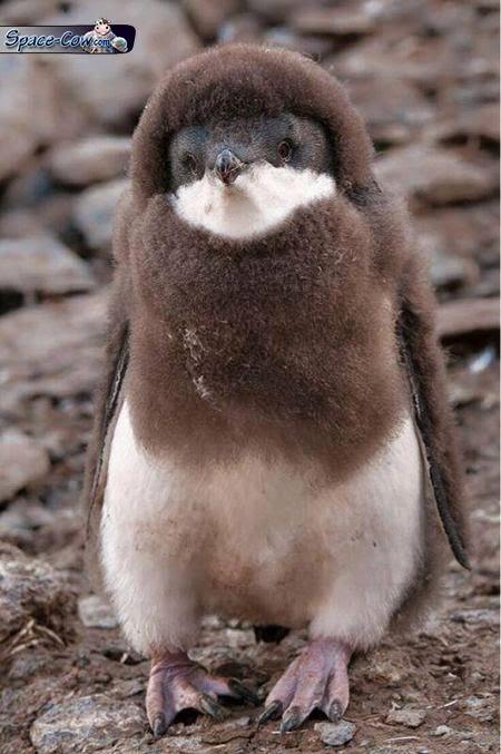 funny penguin picture humor