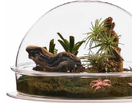 plant terrarium kits, glass plant terrariums