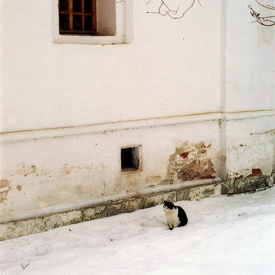 cat of Moscow russia