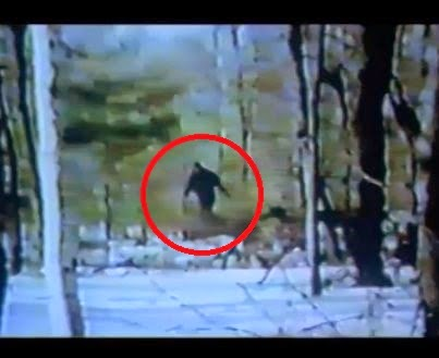 Bigfoot Documentary