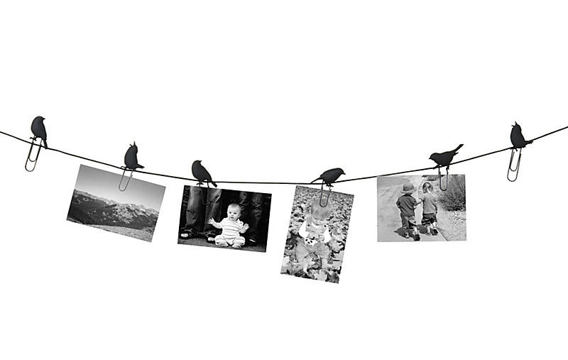 Birds on a Wire Photo Display and Other Cool Office Accessories