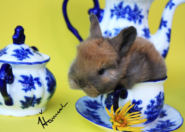 cute baby bunny sitting in a teacup