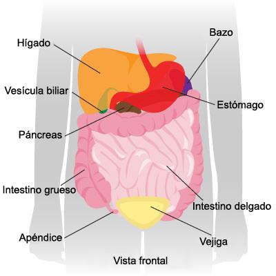 Tecnico en Instrumetacion Quirurgica: ESTRUCTURAS DE LA CAVIDAD ...