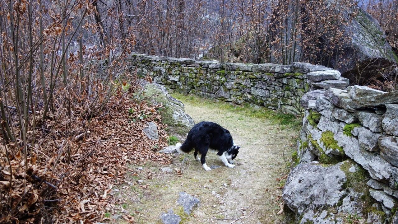 Was tun wenn ein freilaufender Hund meinen