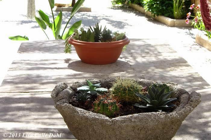 Descubriendo hojas unas cuantas macetas sobre la mesa for Varias plantas en una maceta