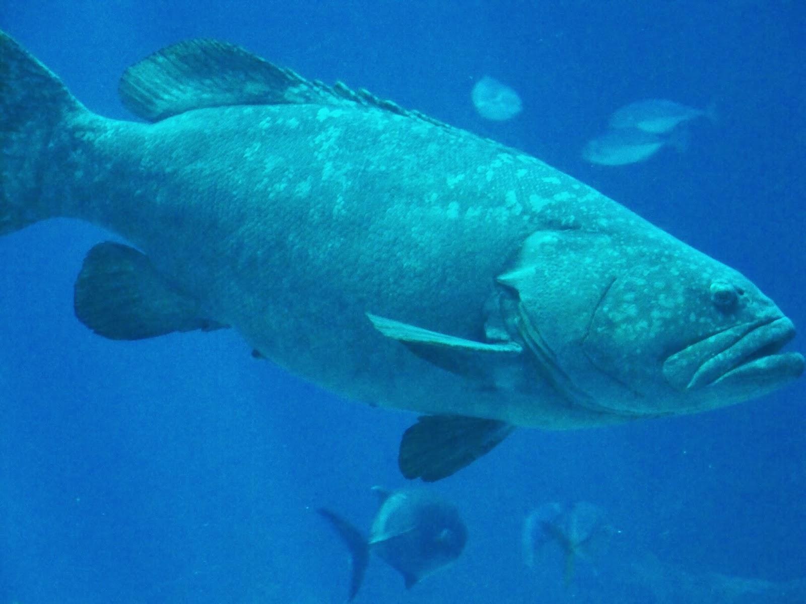 Runaway Bridal Planner Visit The Georgia Aquarium
