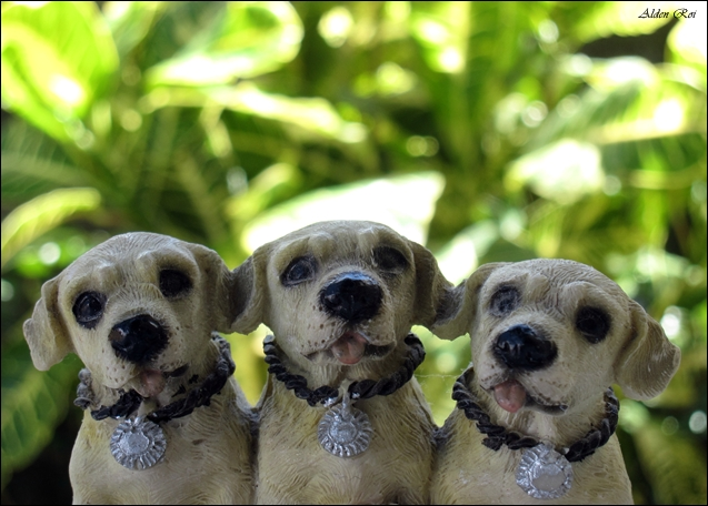 this cute little puppies are only clay figurines.Lifelike photo is achieved by shooting on macromode and using optical zoom. The farther the background, the better.