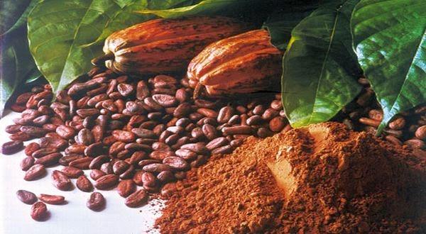Coklat dan Kakao(