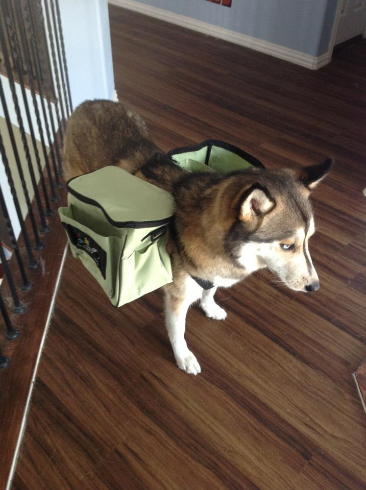 I Looked Up Pictures Of Other People Using Their Dogs For This And Worked My Way Through Making Our Very Own Dog Disc Golf Bag What Do You Think