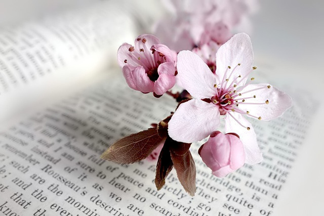 Image of a sprig of wild cherry blossom placed on an open book.