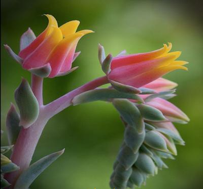 http://www.chezjoeline.com/app/download/10082842795/Fleurs+exotiques+-+Marinette+..+07+07+2015.pps?t=1436374259