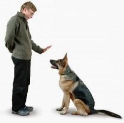Dicas para cães