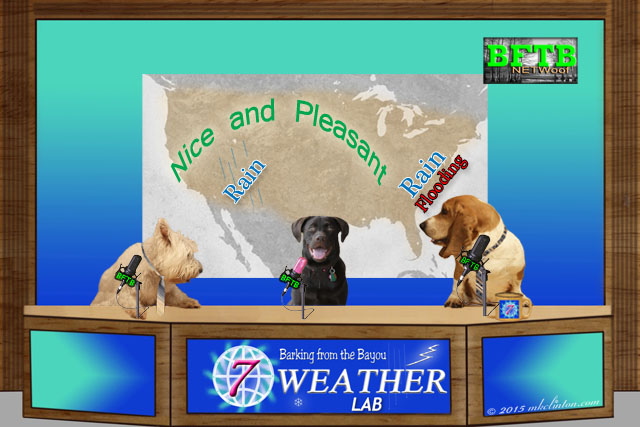 BFTB Weather set with three dogs