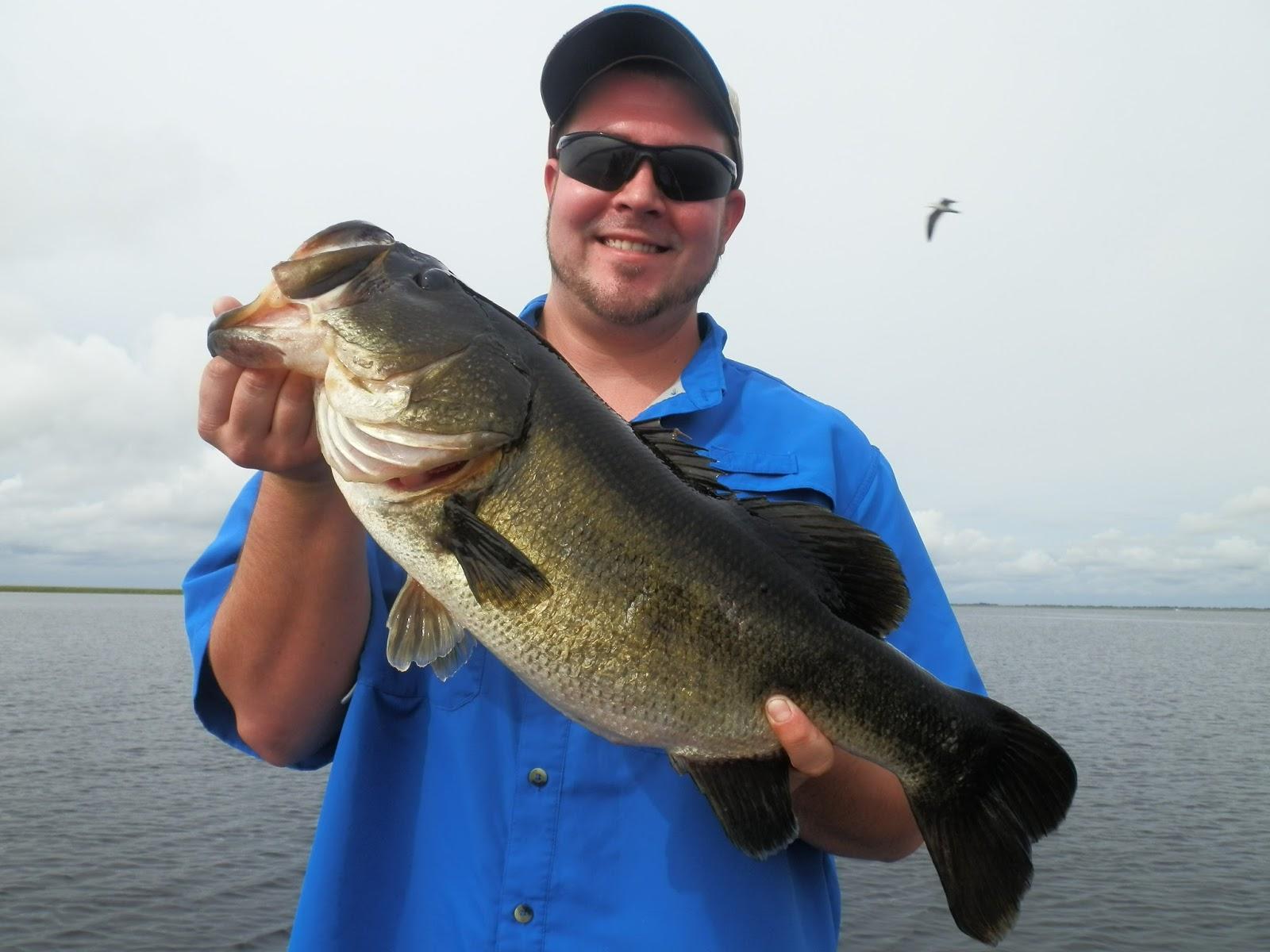 4 big bass in one morning lake okeechobee bass fishing for Big bass fishing