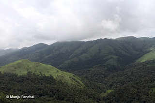 Photograph of landscape at Mandalpatti, Coorg. By Manju Panchal