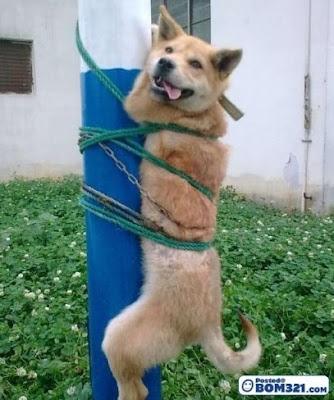 Anjing Kena Ikat Kat Tiang
