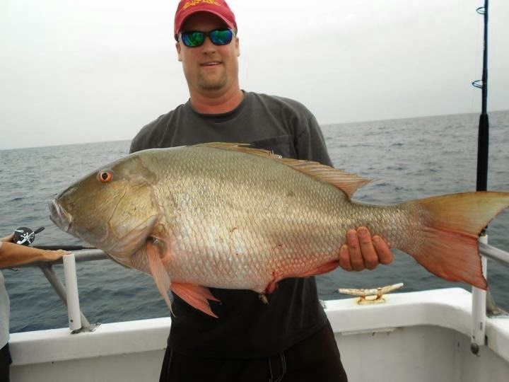 Big fishes of the world snapper mutton lutjanus analis for Snapper fish florida