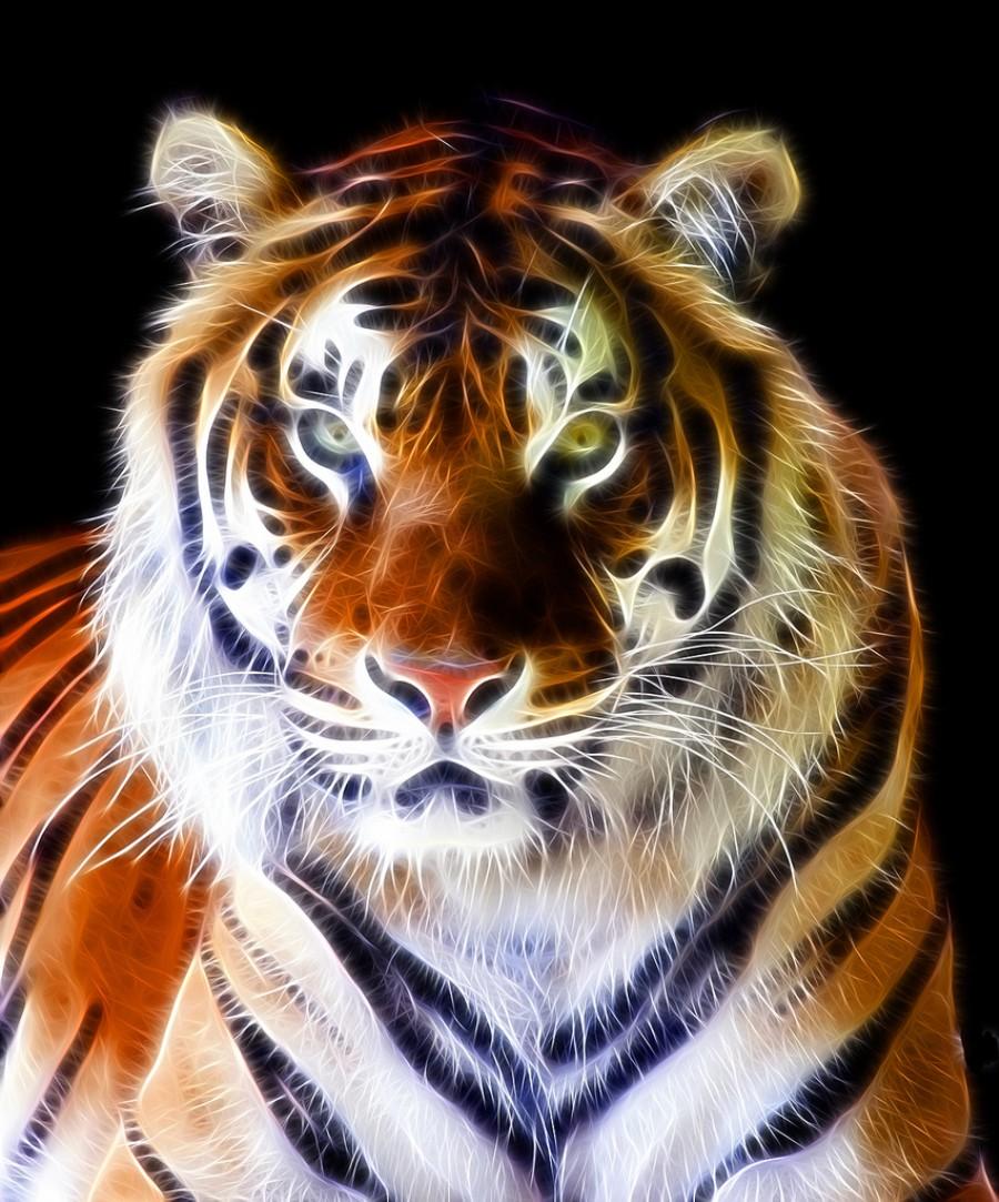 planet earth animals - photo #35