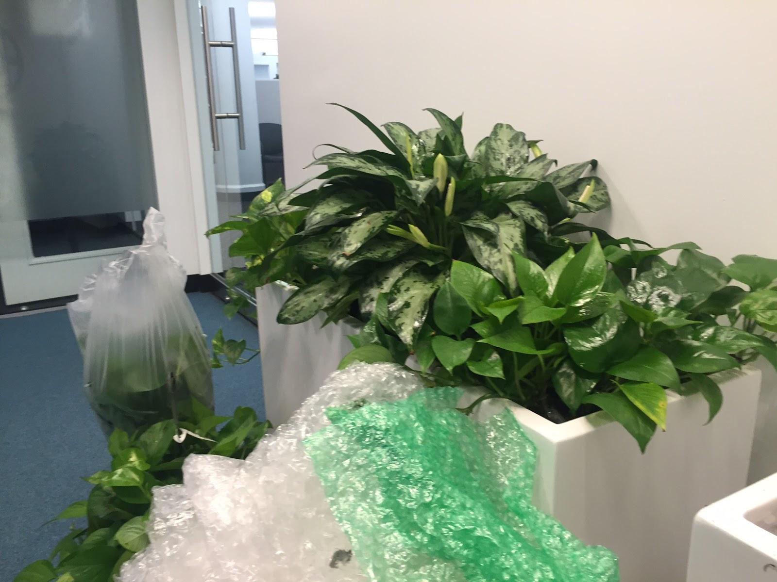 office planter boxes. Office Plant Leasing Boston MA;. Bubble Wrap Filler Inside Planter Box Boxes