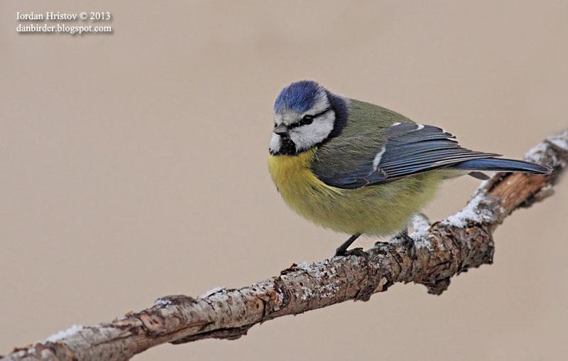 garden birds photography in Bulgaria