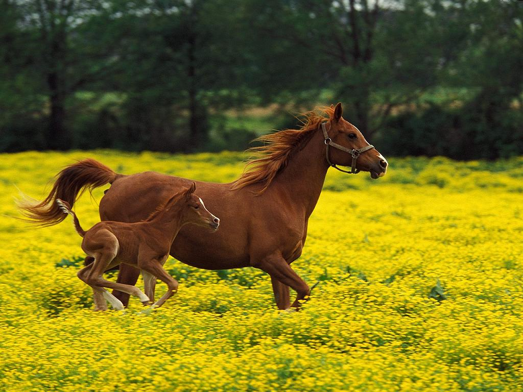 http://4.bp.blogspot.com/-tdG0XsUnOHs/TmOFmRmdHsI/AAAAAAAArWM/nau5SGodxWc/s1600/Horse%252B-%252BBeautiful%252BDesktop%252BWallPapers%252B%25252810%252529.jpg