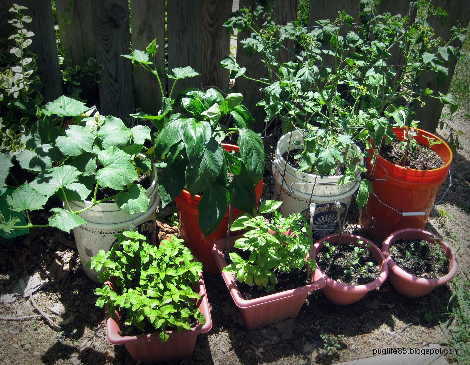 Diy container vegetable garden update this pug life for Diy vegetable garden