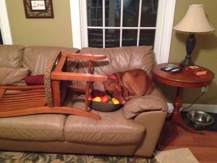 Cute dogs - part 7 (50 pics), dog sleeps on the couch