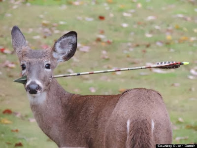Deer With Arrow In Its Head Rescued In New Jersey