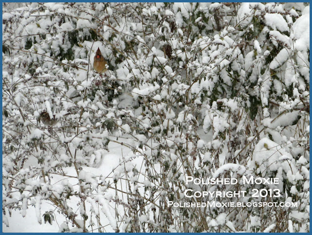 Picture of female cardinal and sparrow peeking out through snow in a bush.