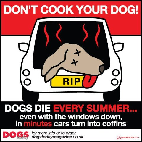 Take Good Care of Your Canine Friend