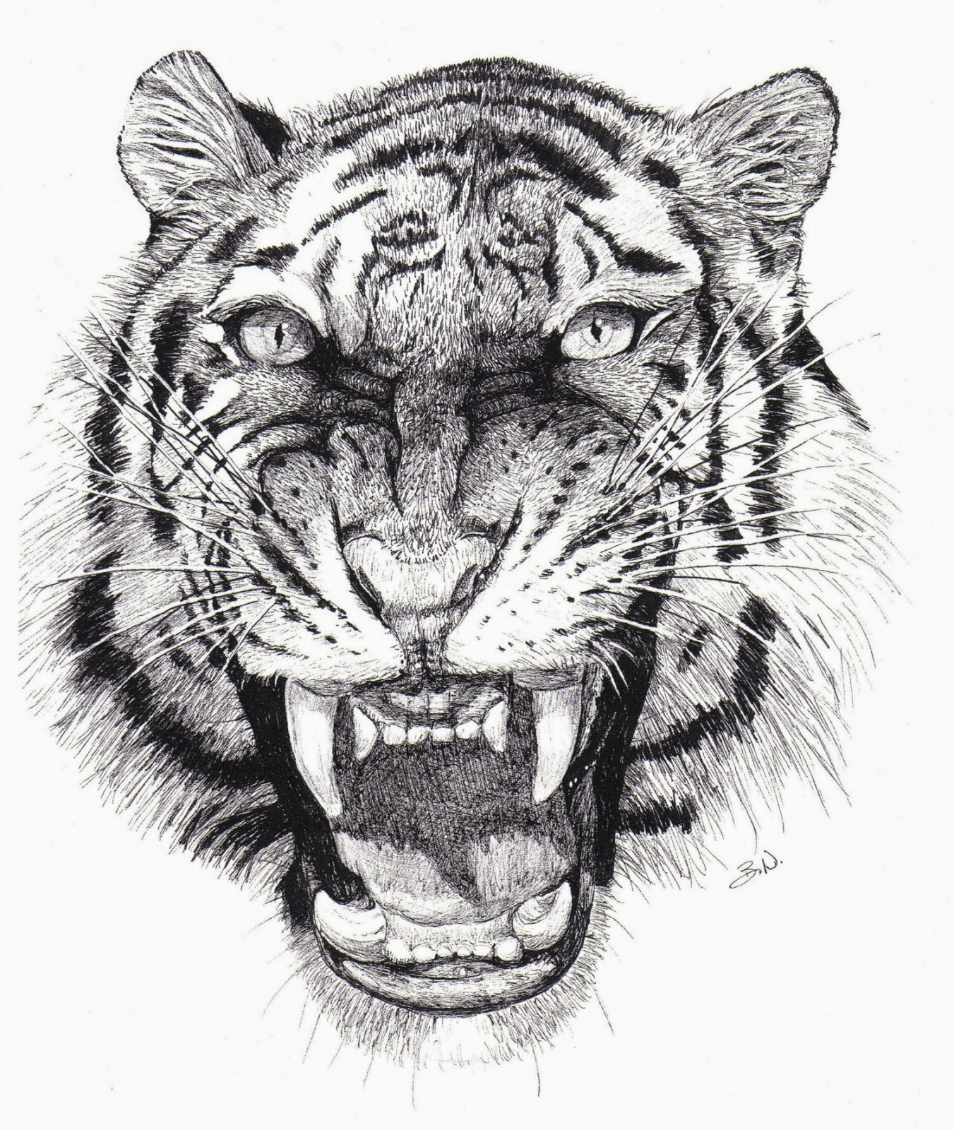 Uncategorized Tiger Drawings the animal cabin drawings of tigers snarling tiger brenda nelson