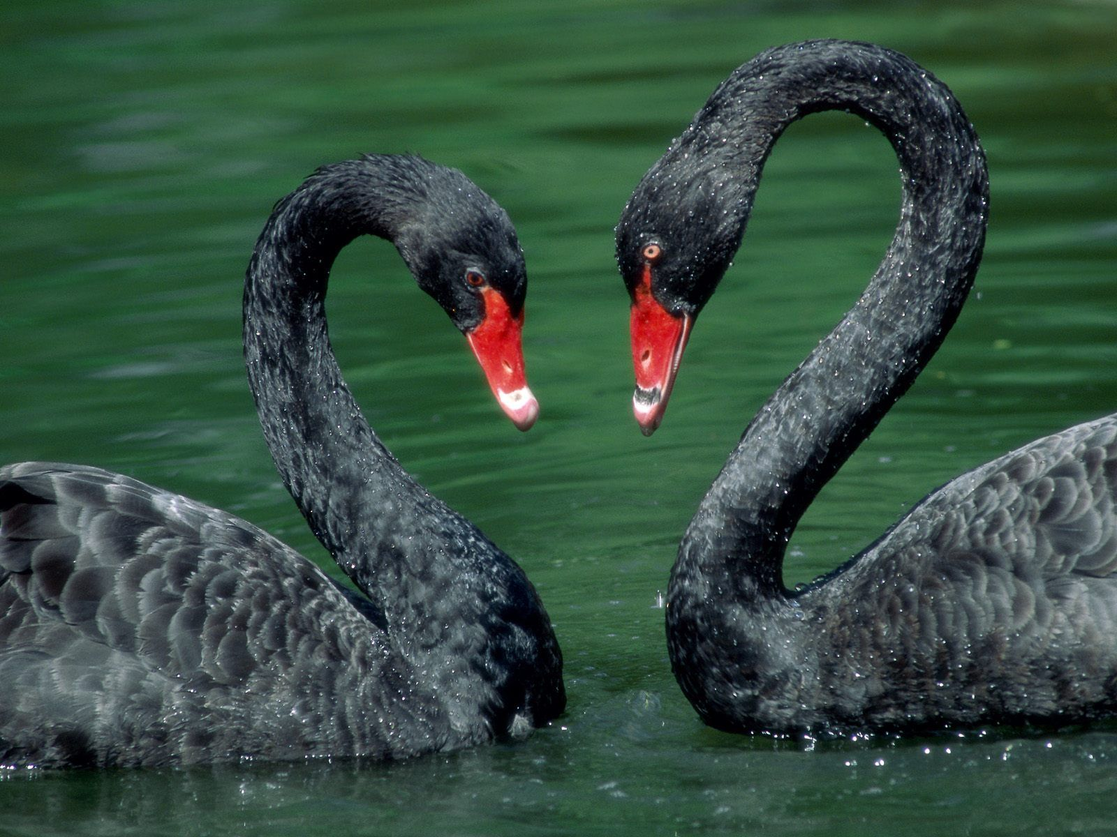 Fotos de Reptiles Animales Web Quest Webnode - imagenes de animales aves