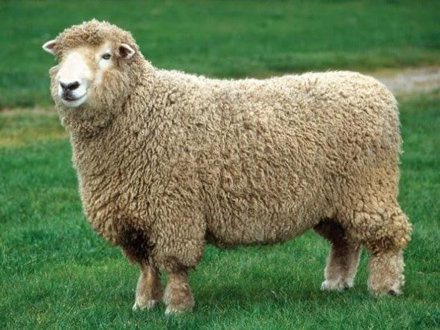 Tác dụng của nhau thai cừu và sữa ong chúa trong việc chăm sóc sức khoẻ