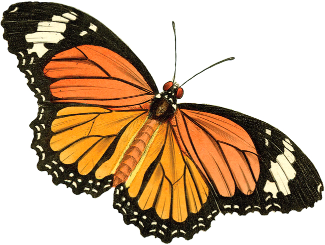 free vintage butterfly clipart - photo #2