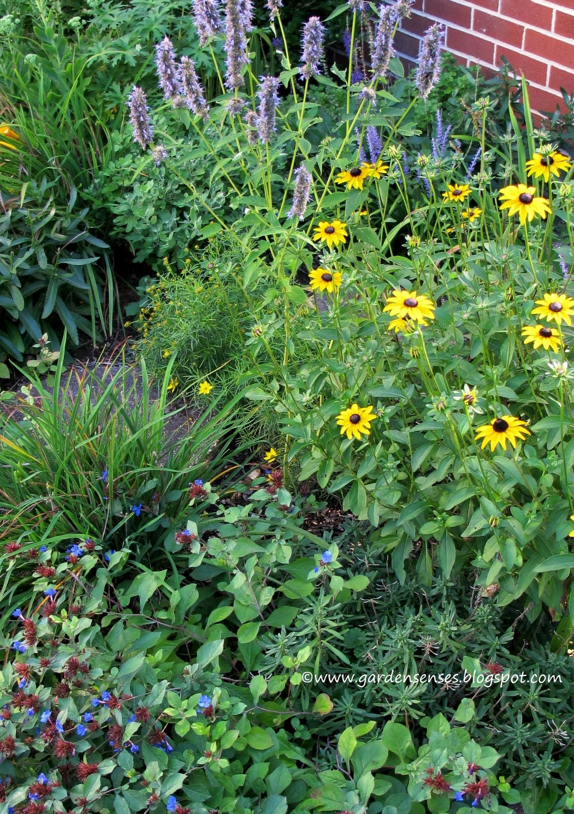 Garden Sense Late Summer Combinations Iii