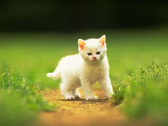 #14 Cute Animal Wallpaper