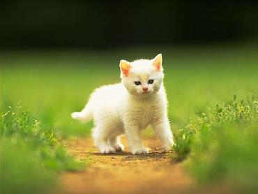 #14 Cute Animal Wallpaper