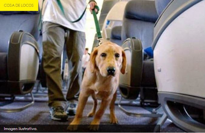 Perro con diarrea obliga a un avión a aterrizar