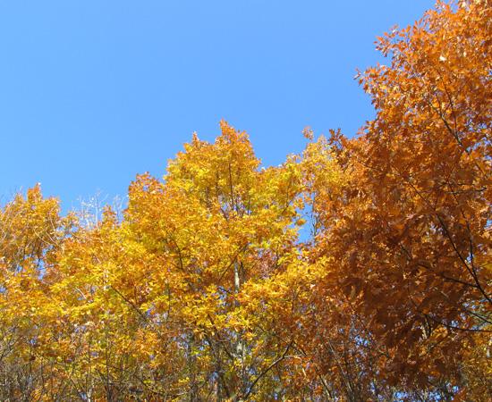 gold autumn, золотая осень