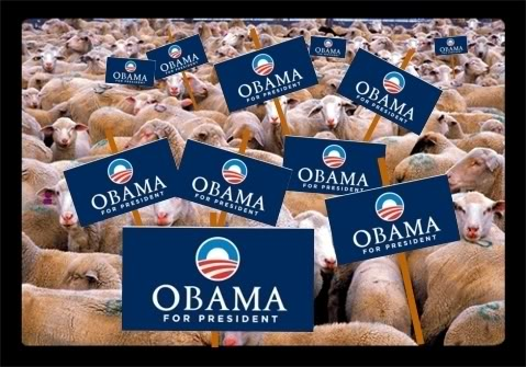 sheep obama