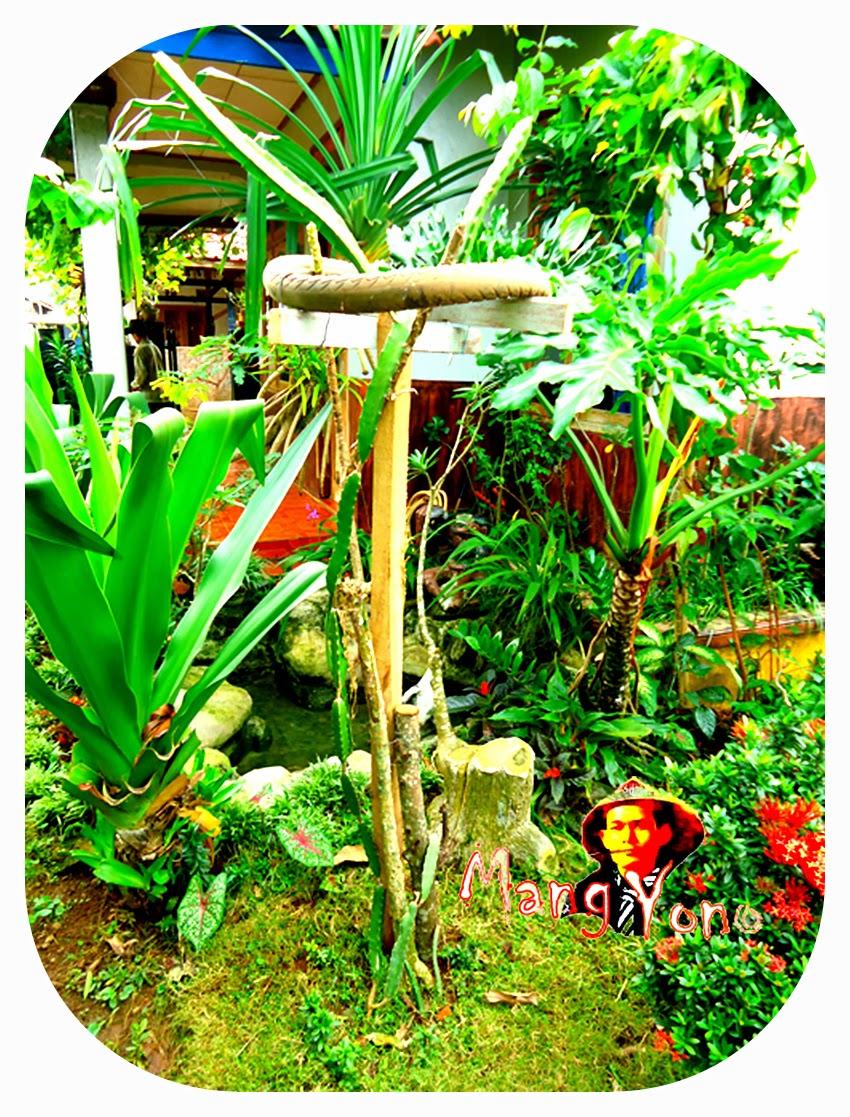 Tiang penopang untuk tanaman buah naga