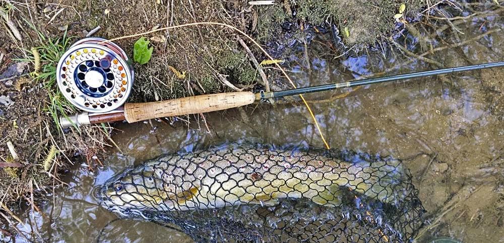 trout, truite