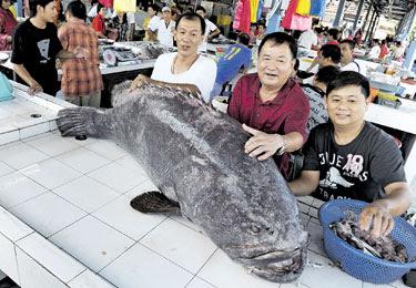 Kerapu Gergasi 168kg Dijual RM7,560