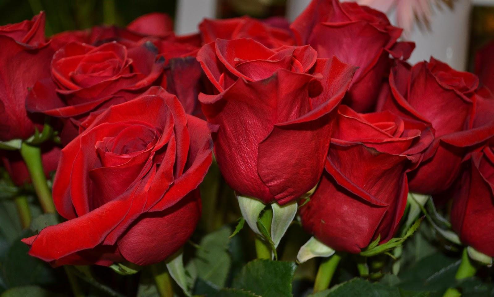 Pin by matilde komjetan on flores saludos mensajes y - Gama de colores rosas ...