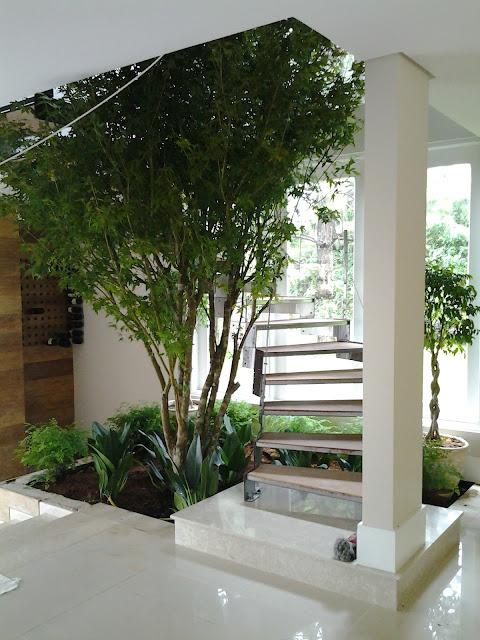 acer palmatum no jardim