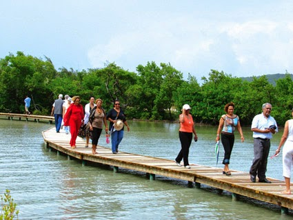 Mangroves Martinique Sainte-Anne